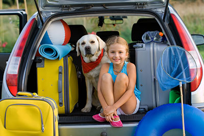 tips for moving with a pet quantum insurance group inc